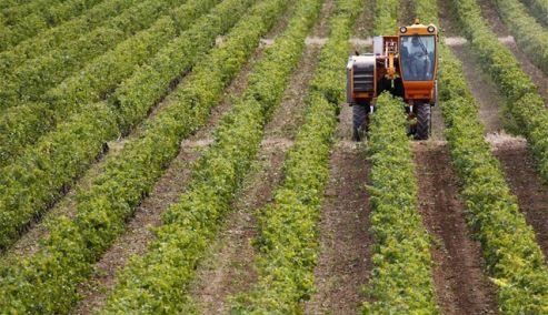 Γ. Οικονόμου: Ο Έλληνας αγρότης μπορεί να είναι πρωταγωνιστής στο νέο παραγωγικό μοντέλο της εθνικής οικονομίας και θα είναι